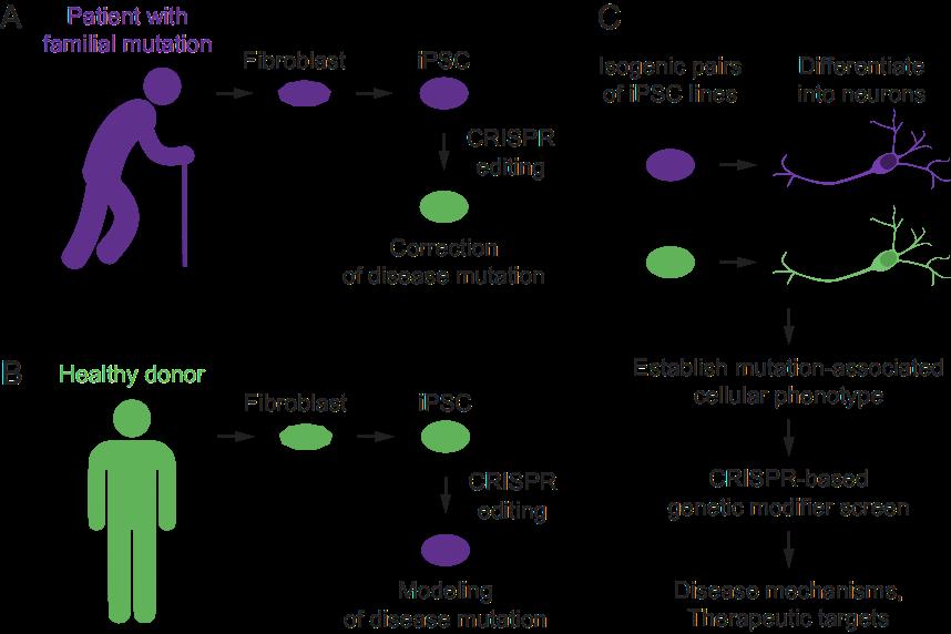 iPSC CRISPR