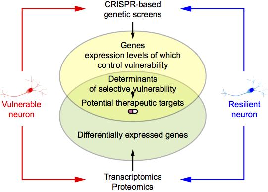 CRISPR selective vulnerability